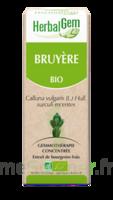 Herbalgem Bruyère Macérat Bio à SARROLA-CARCOPINO